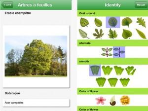 edition-pdf-identifier-arbres-app-gratuite-iphone-ipad-du-jour-4